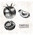digital detailed tomatoes hand drawn vector image