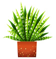 A houseplant with a pot vector image vector image