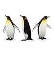 flock emperor penguins on white background vector image
