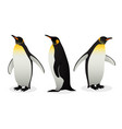 flock of emperor penguins on white background vector image