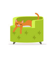 funny red cat sleeping on a green armchair home vector image vector image