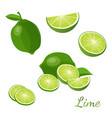 lime with green leaves isolated on white vector image
