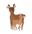 cute hand drawn deer family isolated on white vector image