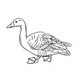 outline duck icon vector image