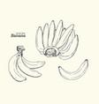 set of line-art bananas overripe banana single vector image vector image