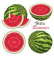 watermelon background set vector image vector image