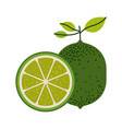 white background with one lemon fruit and lemon vector image vector image