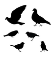 Birds silhouette on white background vector image