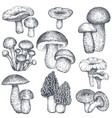 collection of hand drawn mushrooms in vector image