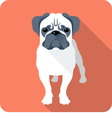 dog Pug icon flat design vector image vector image