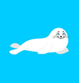 fur seal white isolated small sea calf animal of vector image