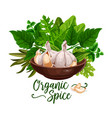 organic spices and cooking herb ingredient poster vector image vector image