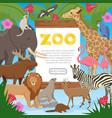 zoo cartoon poster vector image