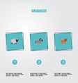 flat icons horse panther mutton and other vector image