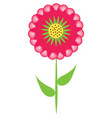 red aster flower vector image vector image