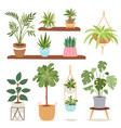 house indoor plants and nature flowers interior vector image