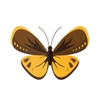 Colored cartoon butterfly isolated on white vector image vector image