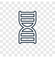 dna strand concept linear icon isolated on vector image