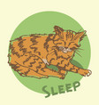 sleeping cat sketch vector image