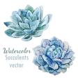 Succulent flowers vector image