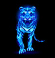 blue fire tiger isolated on black background vector image vector image