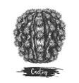 cactus plant desert cacti sketch vector image vector image