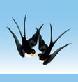 kiss swallows vector image vector image