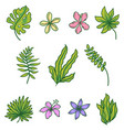 tropical set with fowers and palm leaves vector image