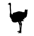 ostrich silhouette vector image