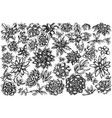 set hand drawn black and white succulent vector image vector image