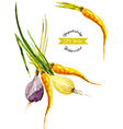 Watercolor vegetables Onion and carrot vector image vector image