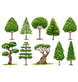 Different types of trees vector image vector image