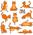 Funny red cat doing yoga position vector image