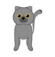 isolated cute cat vector image