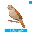 Nightingale learn birds educational game vector image vector image
