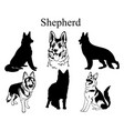 shepherd set collection pedigree dogs black vector image vector image