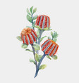 watercolor australian banksia composition vector image vector image