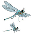 3d model dragonfly on white background vector image vector image