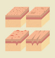 layers of skin types vector image