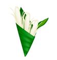 Michelia Alba or Michelia Champaca in Banana Leaf vector image vector image