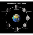 Phases of the Earths Moon vector image