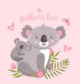 cute koala animal mom hugging baaustralia vector image vector image