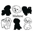 maltese set collection pedigree dogs black vector image