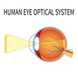 the human eye optical system vector image vector image