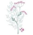 valerian meadow plant vector image vector image