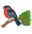 Bullfinch vector image vector image