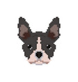 french bulldog head in pixel art style vector image vector image