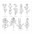 Medical Herbs Set Hannddrawn Style vector image
