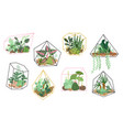 succulents plants stylish floral decor home vector image vector image