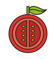 tomato half fresh vegetable isolated icon vector image